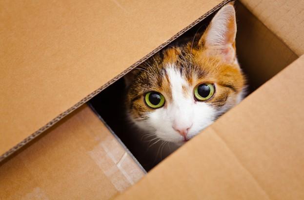 catbox-623x410